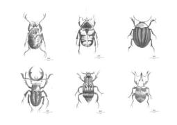 Day home Beetles Posters 6pcs Papper 30x40 cm  Vit/Svart